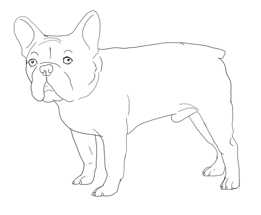 French Bulldog Lines By Valentinekennel On Deviantart