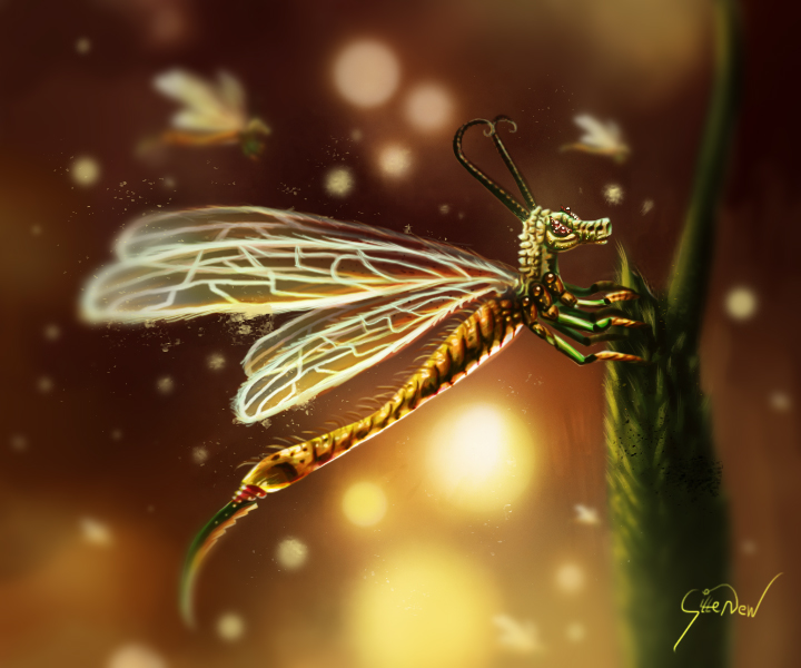 My dear dragonfly by gvbn10