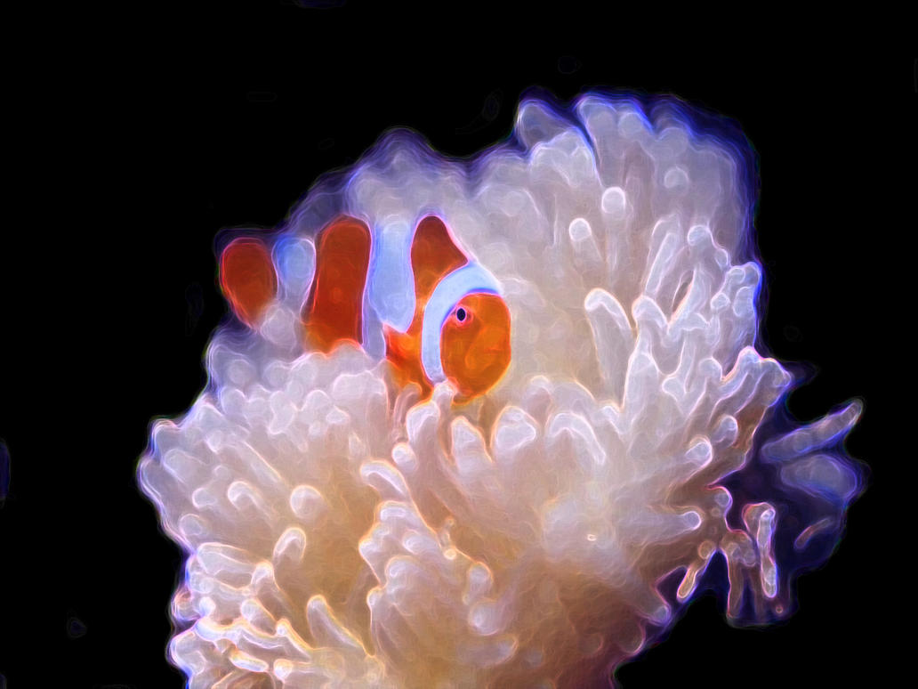 Clownfish at Home by Clownfish on DeviantArt
