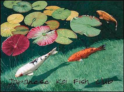 Japanese koi fish japanese koi fish club deviantart for Koi fish photos