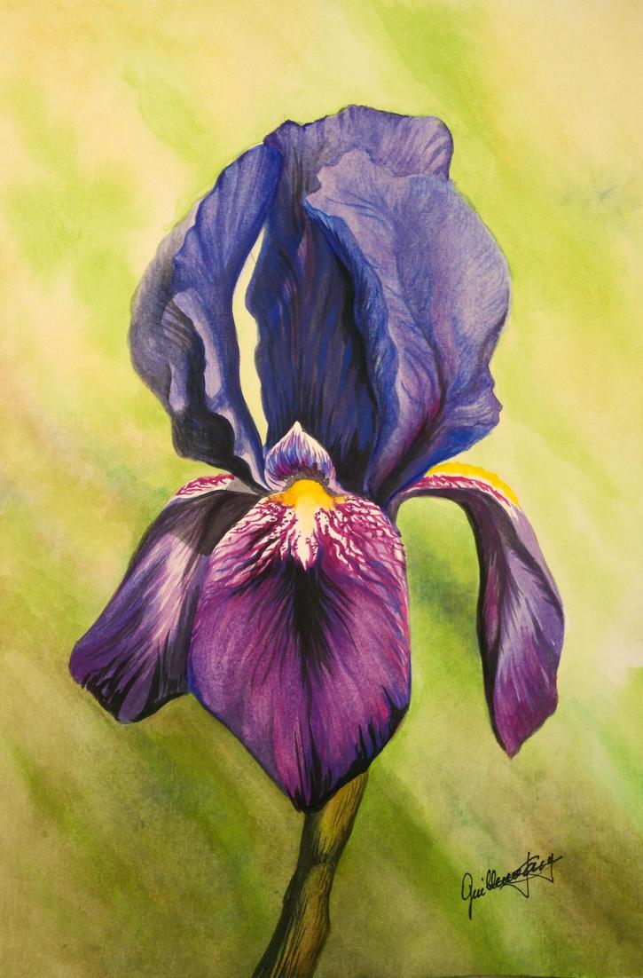 Iris flower my first watercolor by guillotejara on deviantart iris flower my first watercolor by guillotejara izmirmasajfo