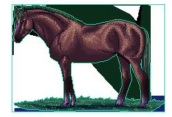 Pony by puckrietveld