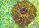 Odd Botany 9
