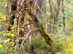 Scenes from a woodland trail 1