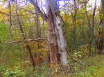 Scenes from a woodland trail 2