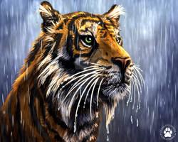 Day 2 - Storm - Sumatran Tiger