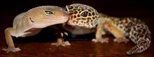 Gecko Bloopers