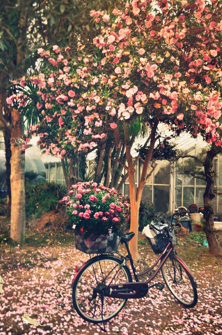 Camellia by DebaratiDas
