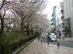 Cherry Blossoms, Mitaka 2