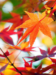 _.orange_ by Kazutaka-A