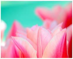 ,.pink,, by Kazutaka-A