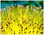 ,,yellow,