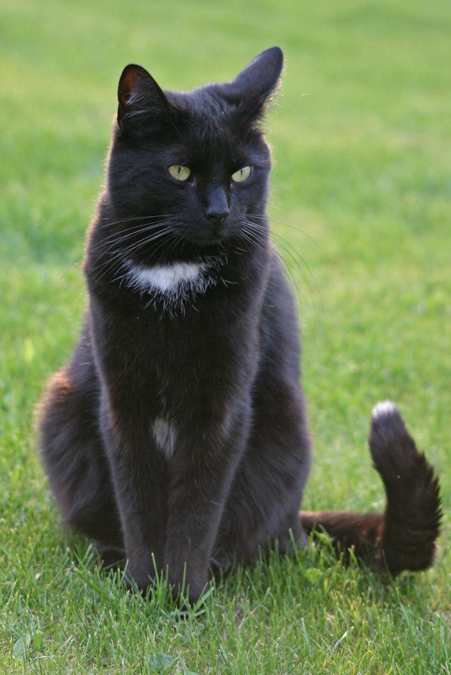 Cat 01 by CorneredRing-Stock
