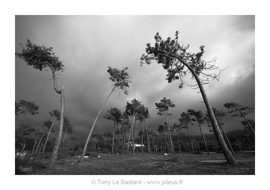 Curtsey by TonyLeBastard