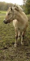 Horse - 73