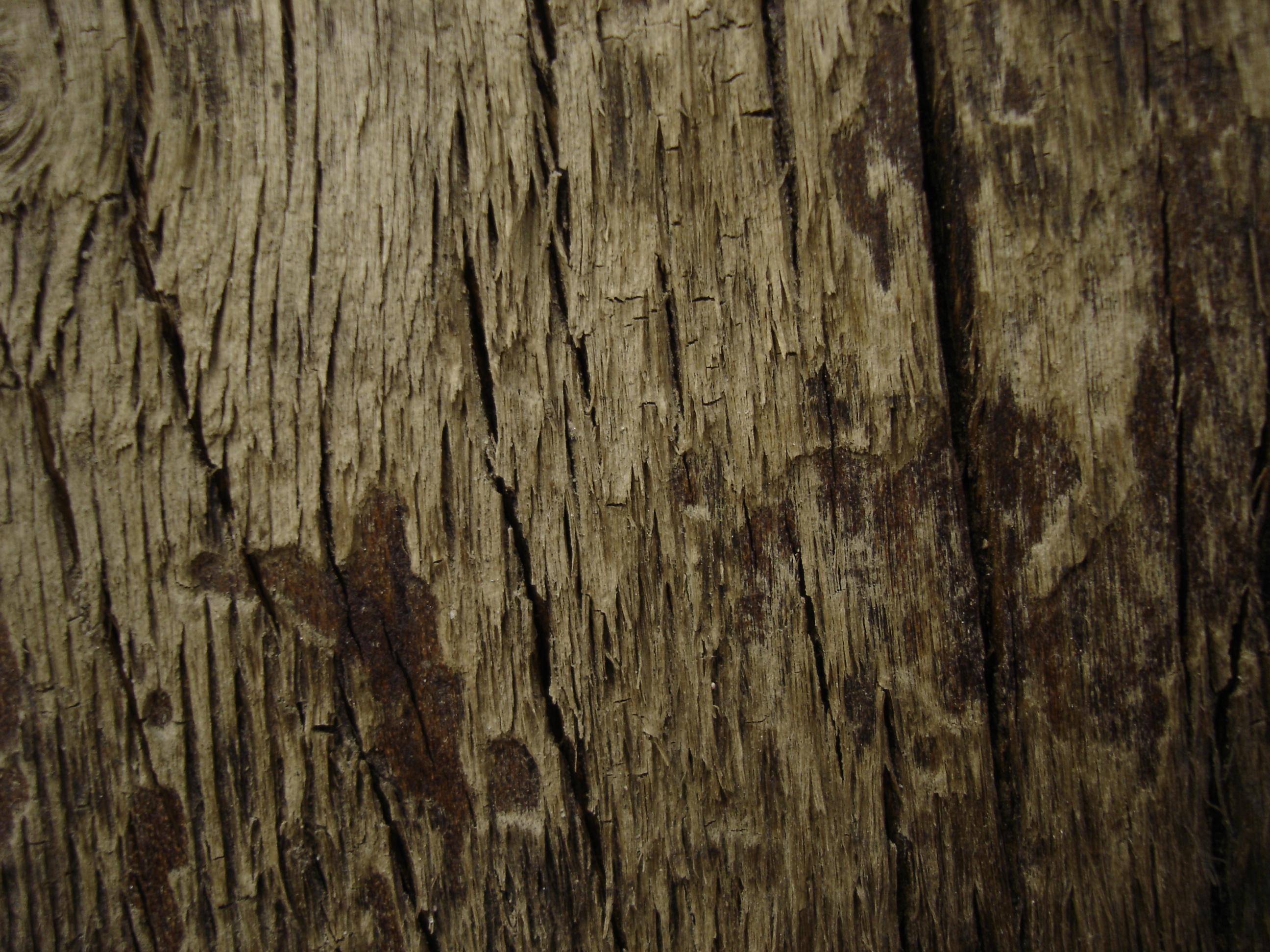 Tree texture - 10