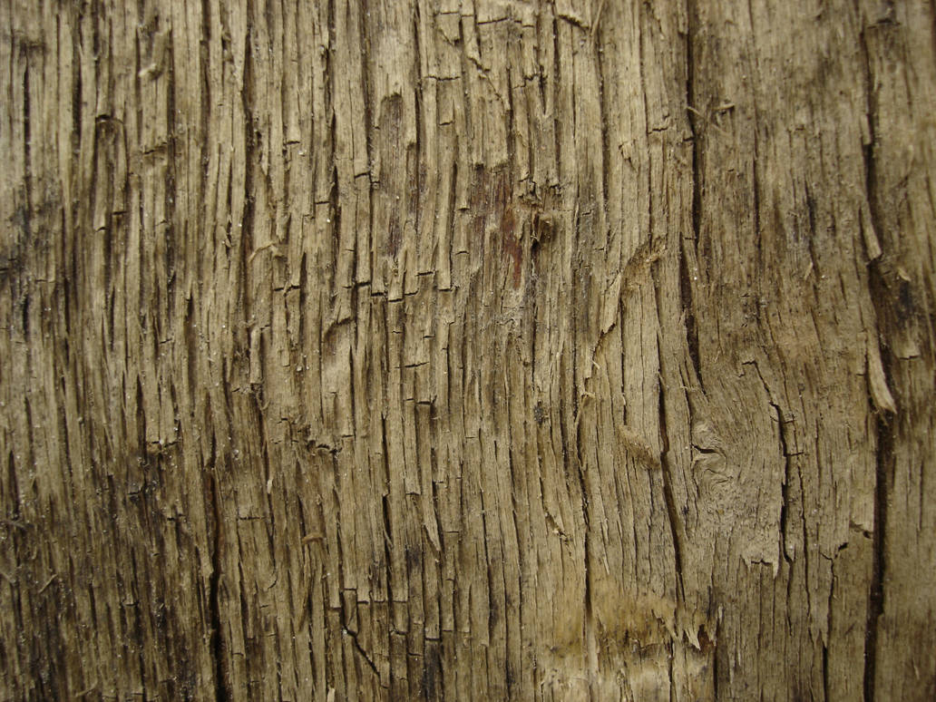 Tree texture - 11 by LunaNYXstock