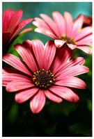 Pink Spring by FizzyChameleon