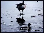 Walk on Water by Cazilu