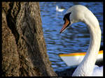 Smile For The Camera Lil Swan by Cazilu