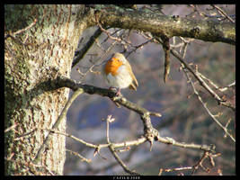 The Robin Who Ran Away by Cazilu