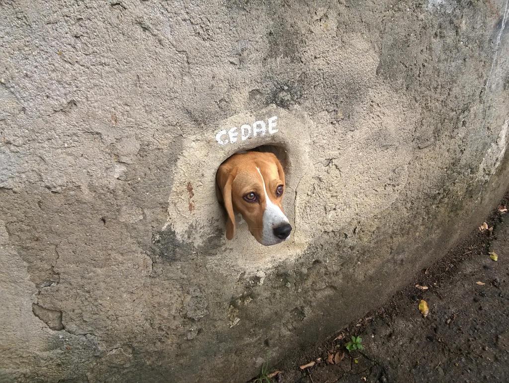 Oh my dog! by alex19860