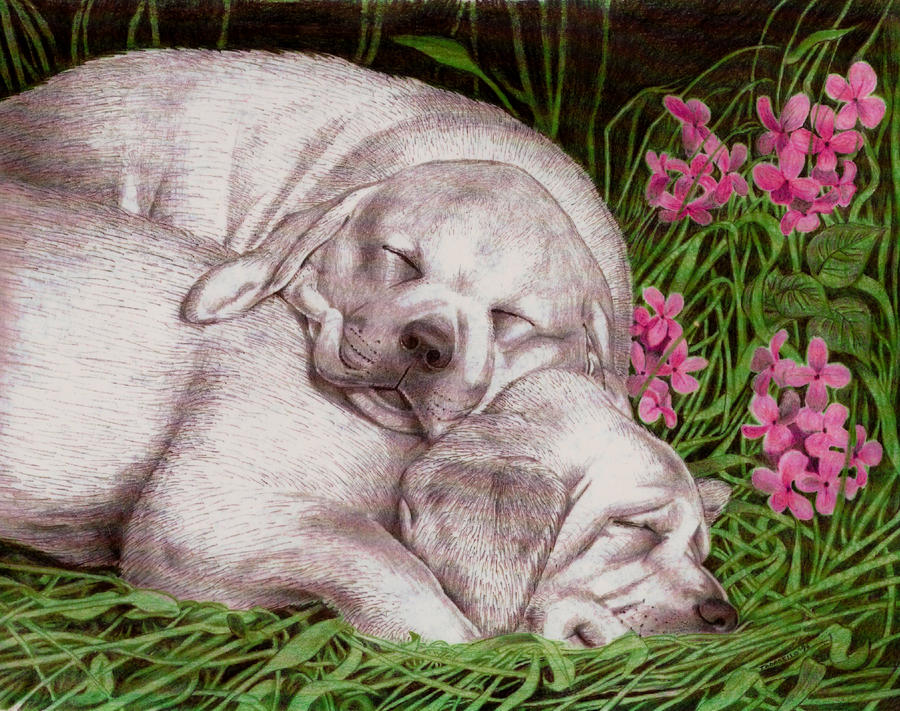 Puppies Colored. Estee Lauder dogs. by FrozenPinky