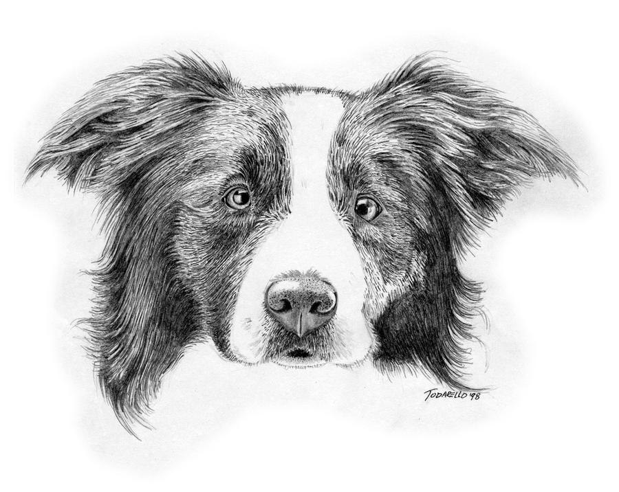 Border Collie Dog. Pencil By FrozenPinky On DeviantArt