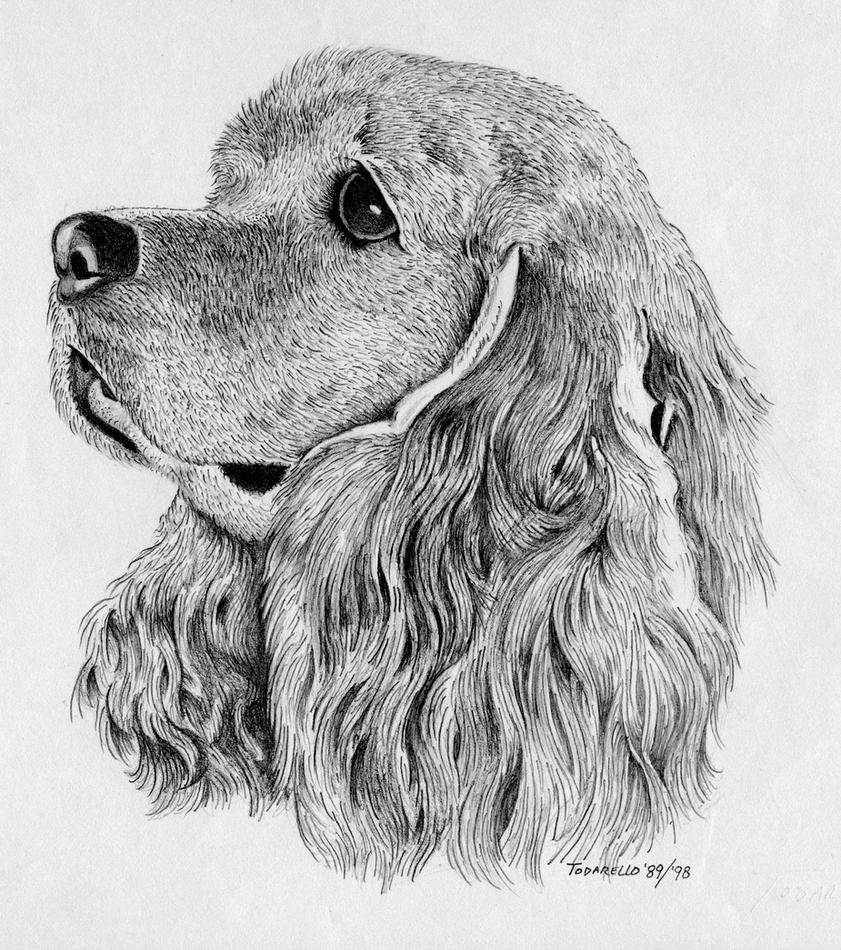 pencil drawings of animals - 841×950