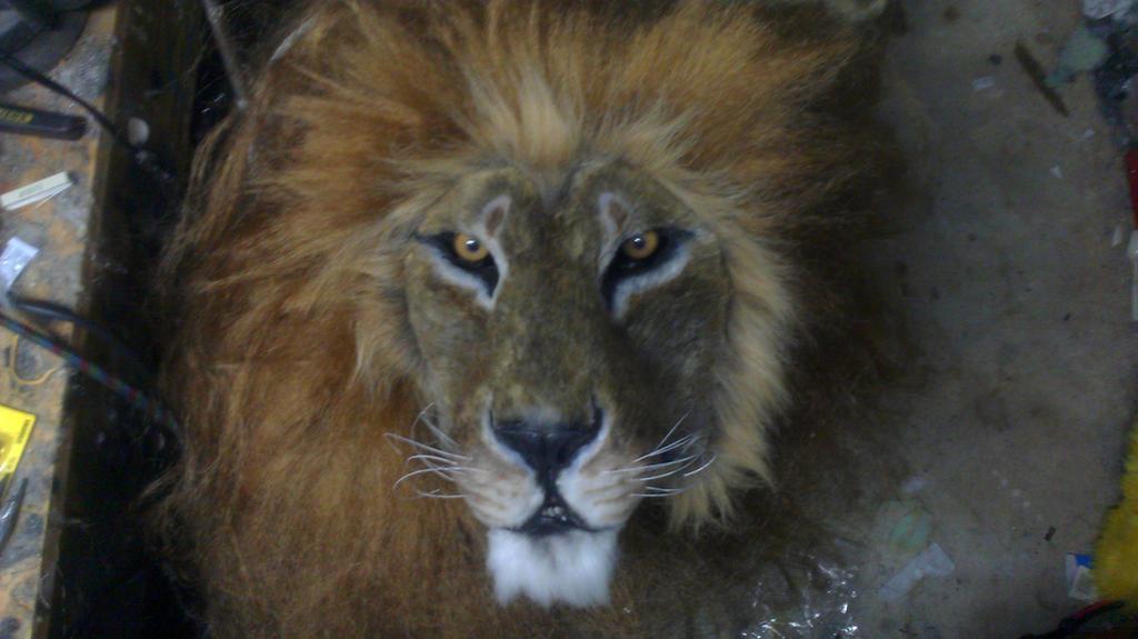 Lion Mask by Thundolis