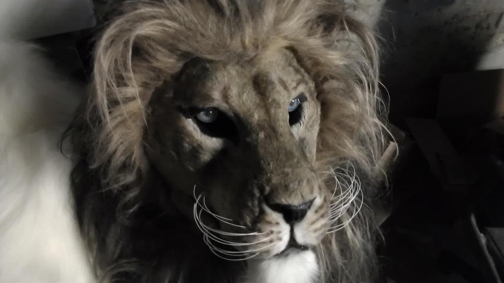 Blue eyed lion by Thundolis