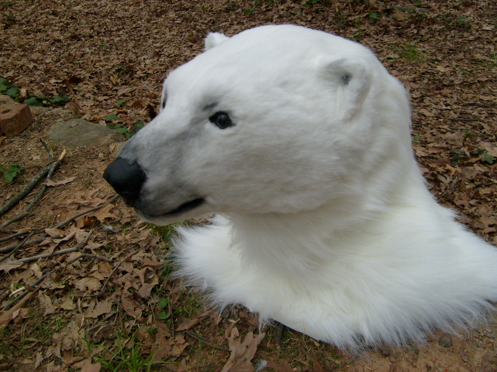 aurora polar bear head by thundolis on deviantart
