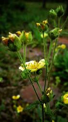 Tahoe Flowers 3 by AV571N