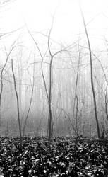 Black woods by kitty-kannibal