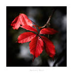 Autumn Red by AndreasResch