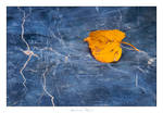 Autumn Leaf - 02