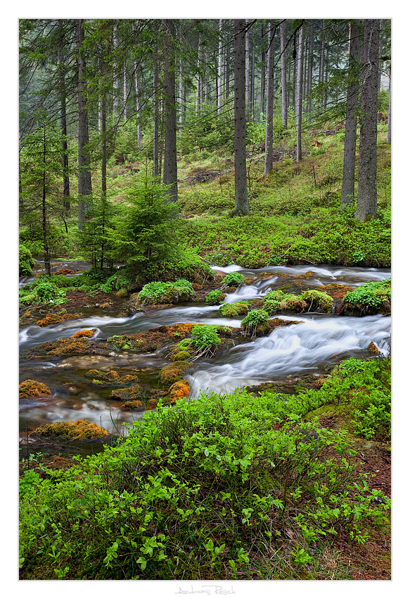 Morning Forest by AndreasResch