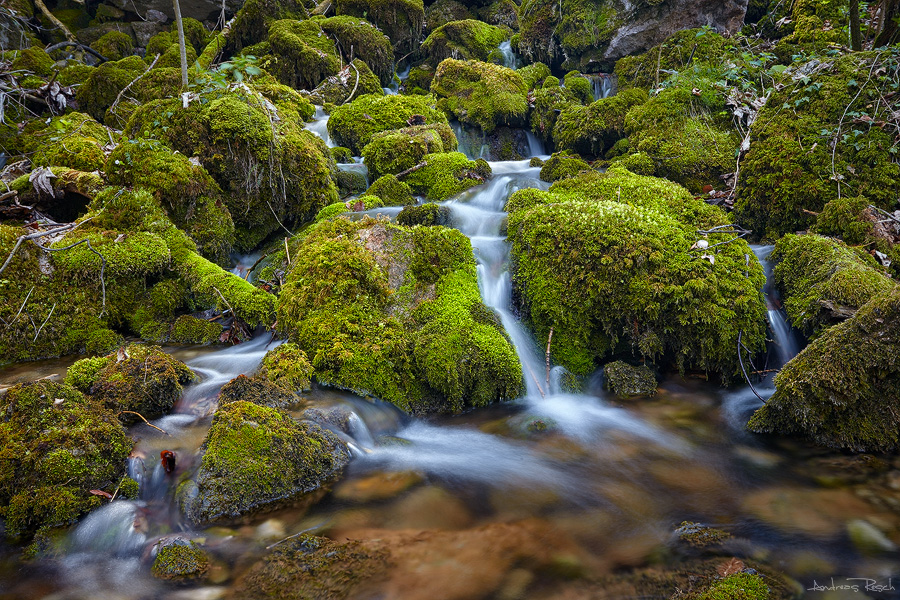 Mossy Corner by AndreasResch