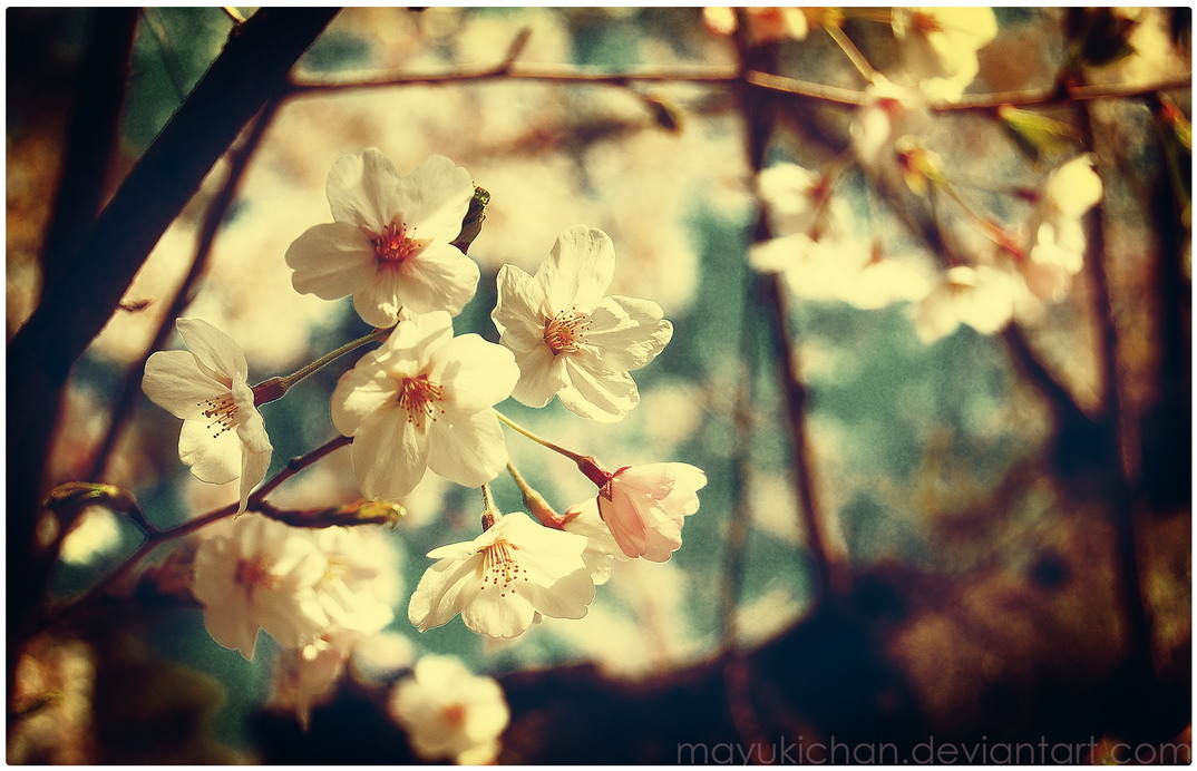 -Vintage Spring-