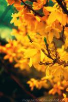-vintage spring II- by mayukichan