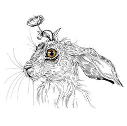 Hare by Carliihde
