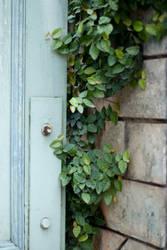 Door n Plant by Kuldip