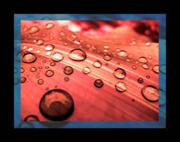 Rain Drops II by SailorOfTheSky
