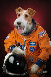 Animal familly portraits 02 Fox Terrier by maximegirault