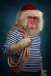 animal familly portraits 03 Snow Monkey