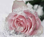 Glittery Rose
