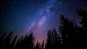 Starry Evening