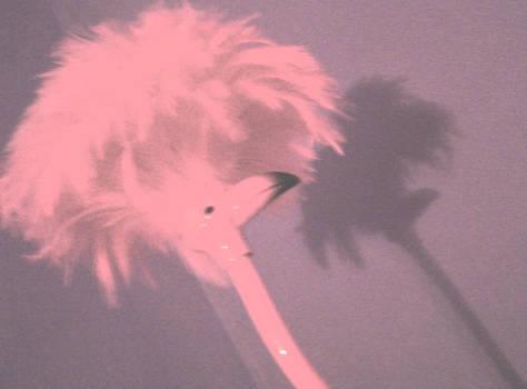 light flamingo
