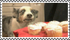 Stamp: Cupcake Dog by SealyTheSeal