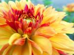 Fire Flower-2